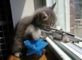 Mes ennemis les chats !